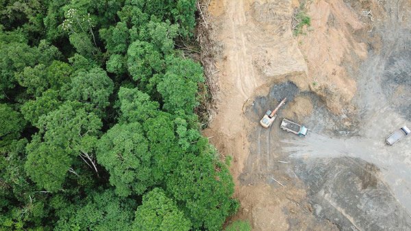Calls for sovereign bond to curb Brazil deforestation