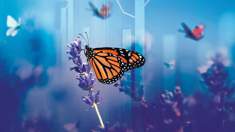Natural capital: Mitigating biodiversity loss in portfolios