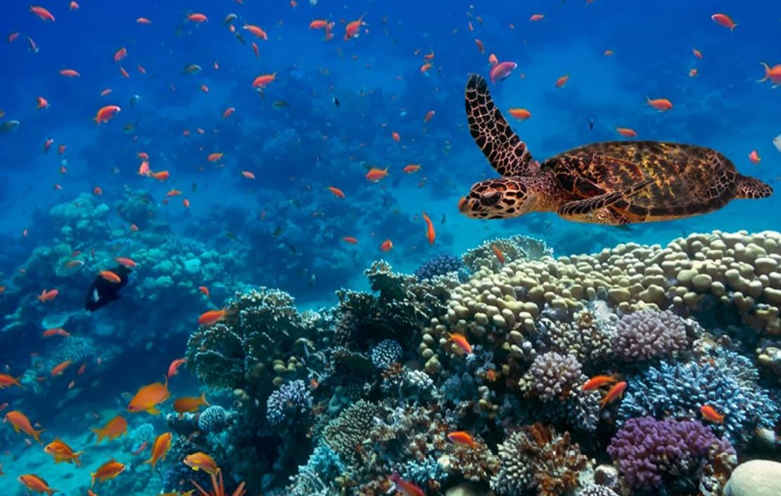 Protecting our ocean against its deadliest predator: humankind
