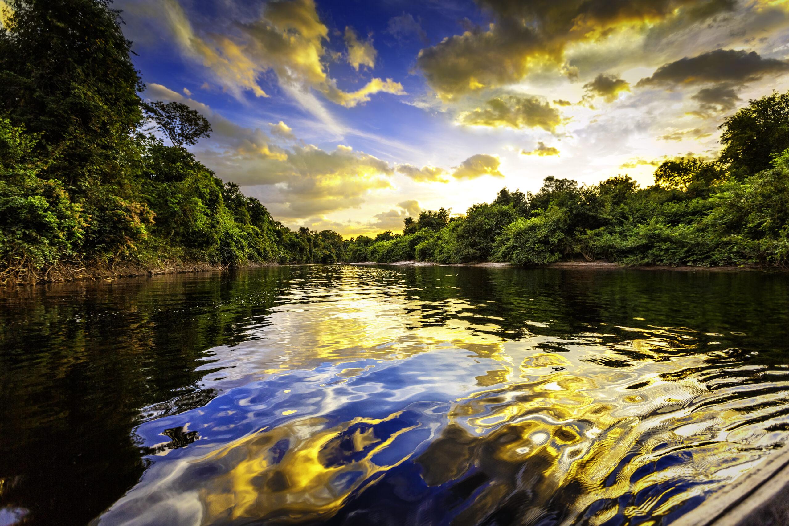 The Amazon's biodiversity: The real winning lottery ticket