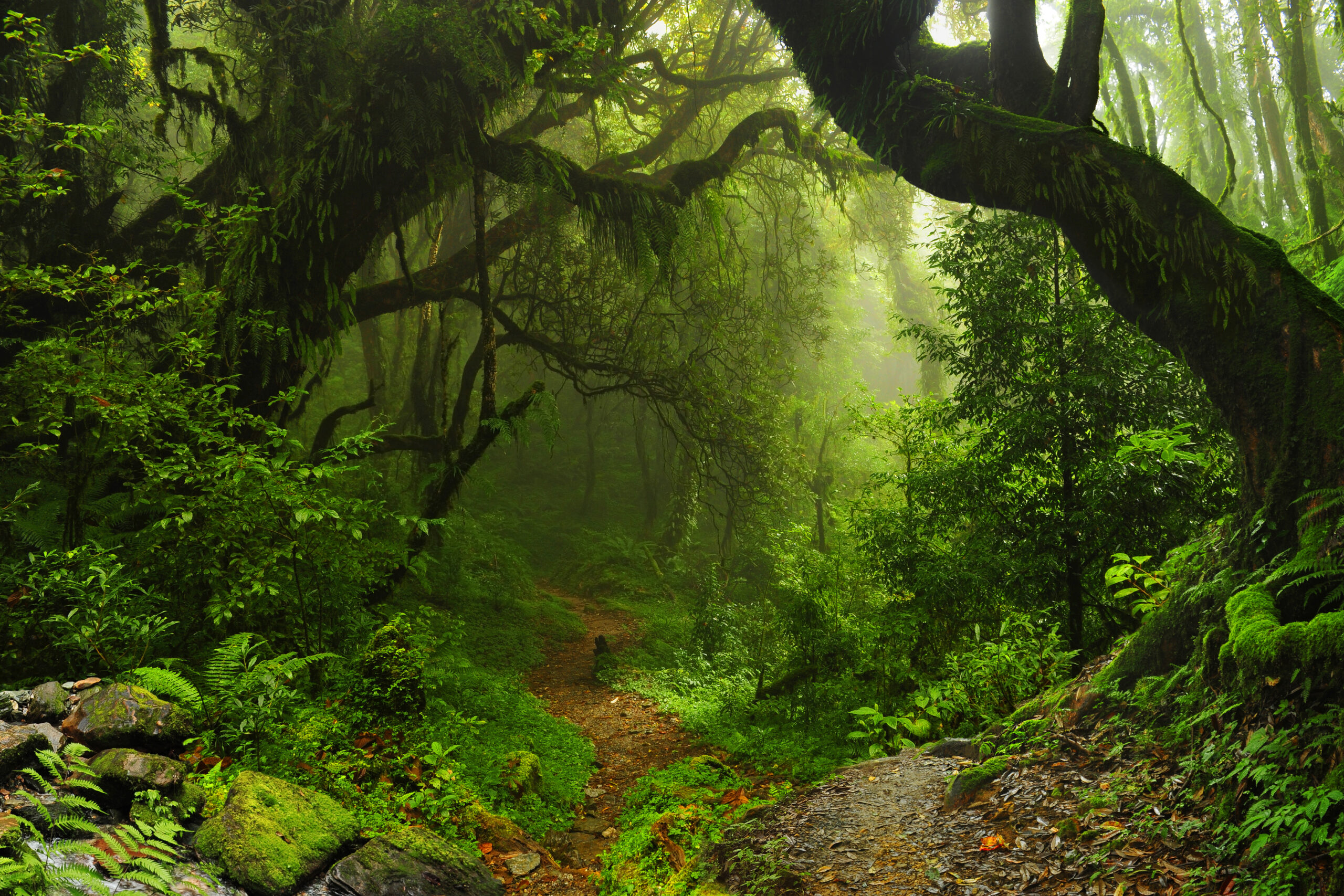 AXA earmarks €1.5bn to protect forest ecosystems